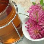 medicinal tea of Red Clover - Trifolium pratense - te - Trifolgio dei Prati rosso